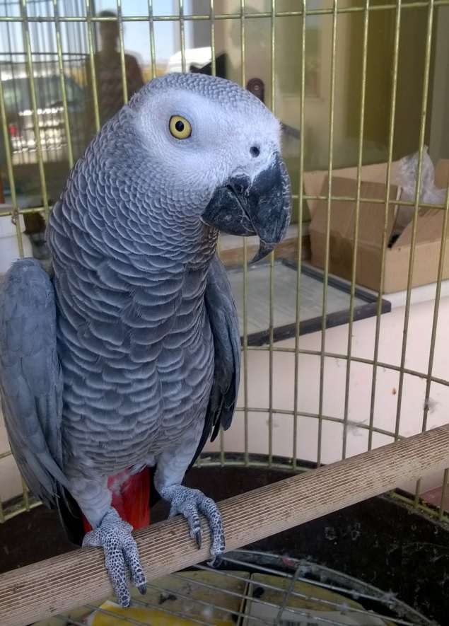 Cage-for-an-African-Grey